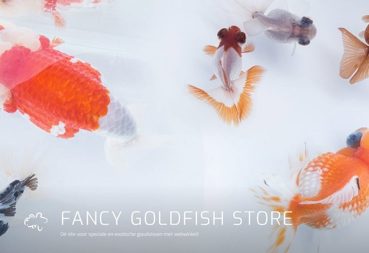 fancy goldfish store